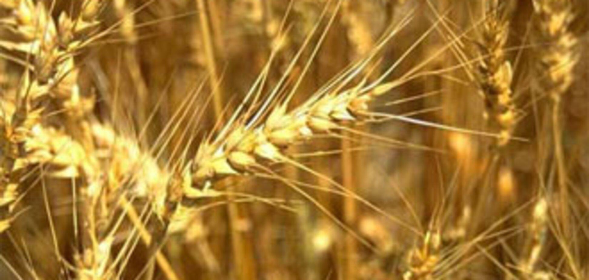 Регионы закупили 94% зерна от общего плана