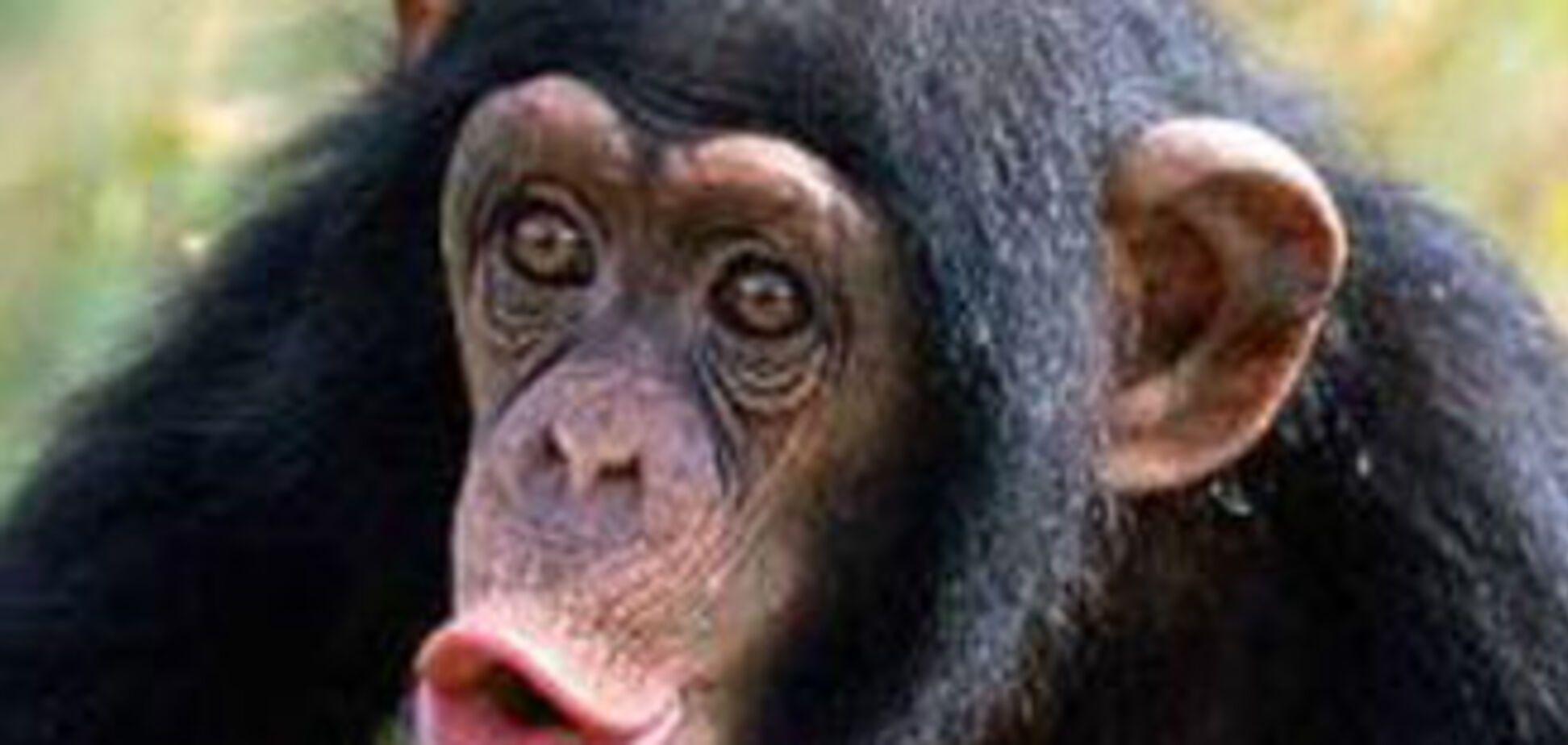 Людство перетворюється на мавп