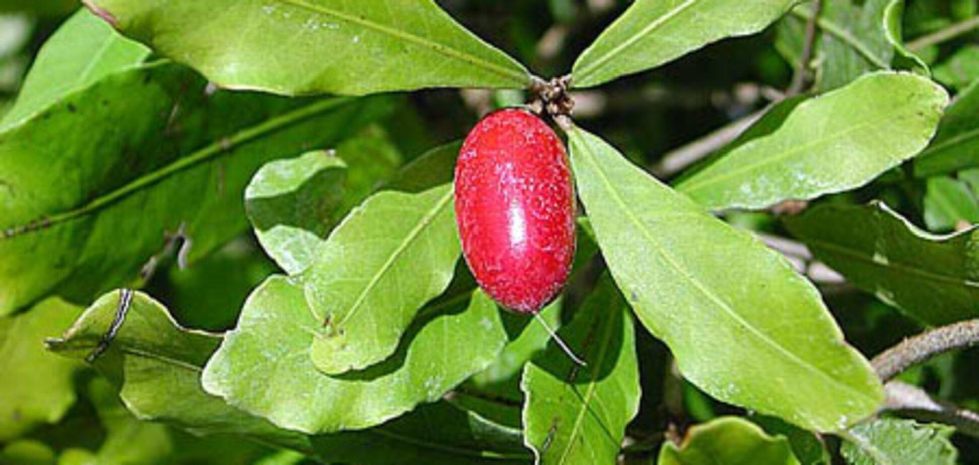 За экзотическими плодами и фруктами