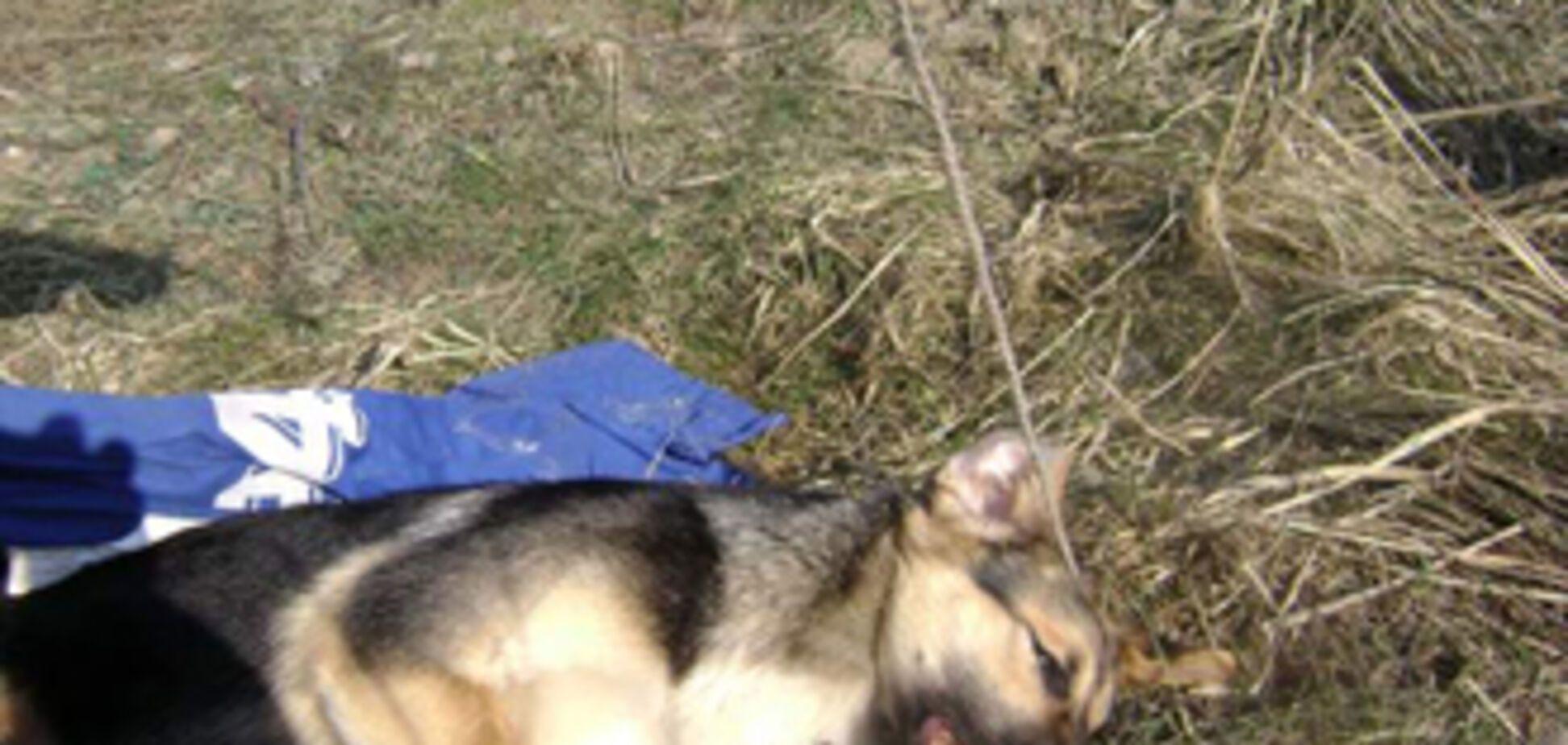 На Черкасщине бешеная собака покусала беременную женщину
