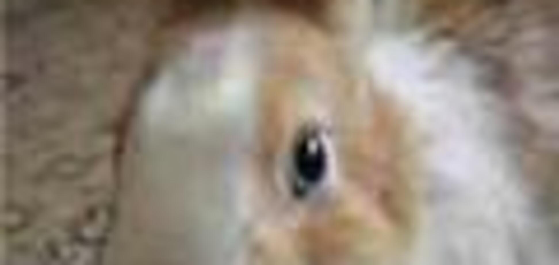 На Львовщине продолжает орудовать чупакабра