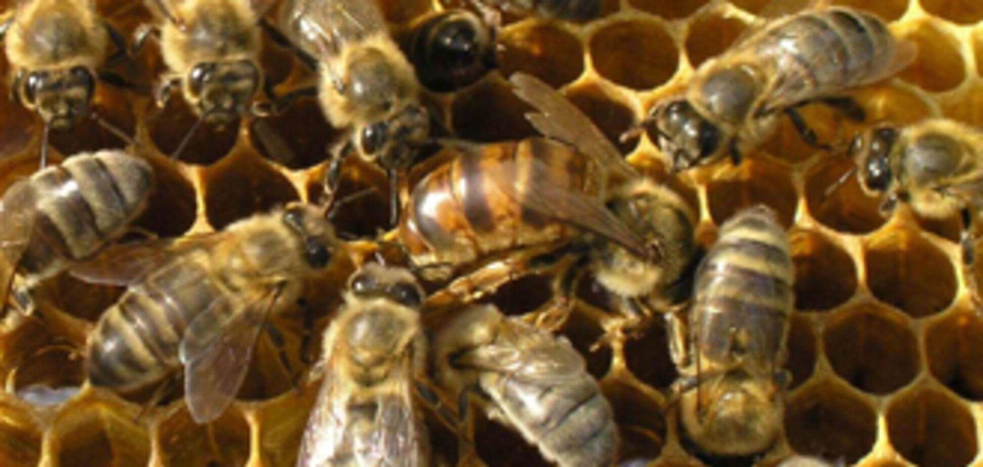 Ющенко станет лицом пчеловодства