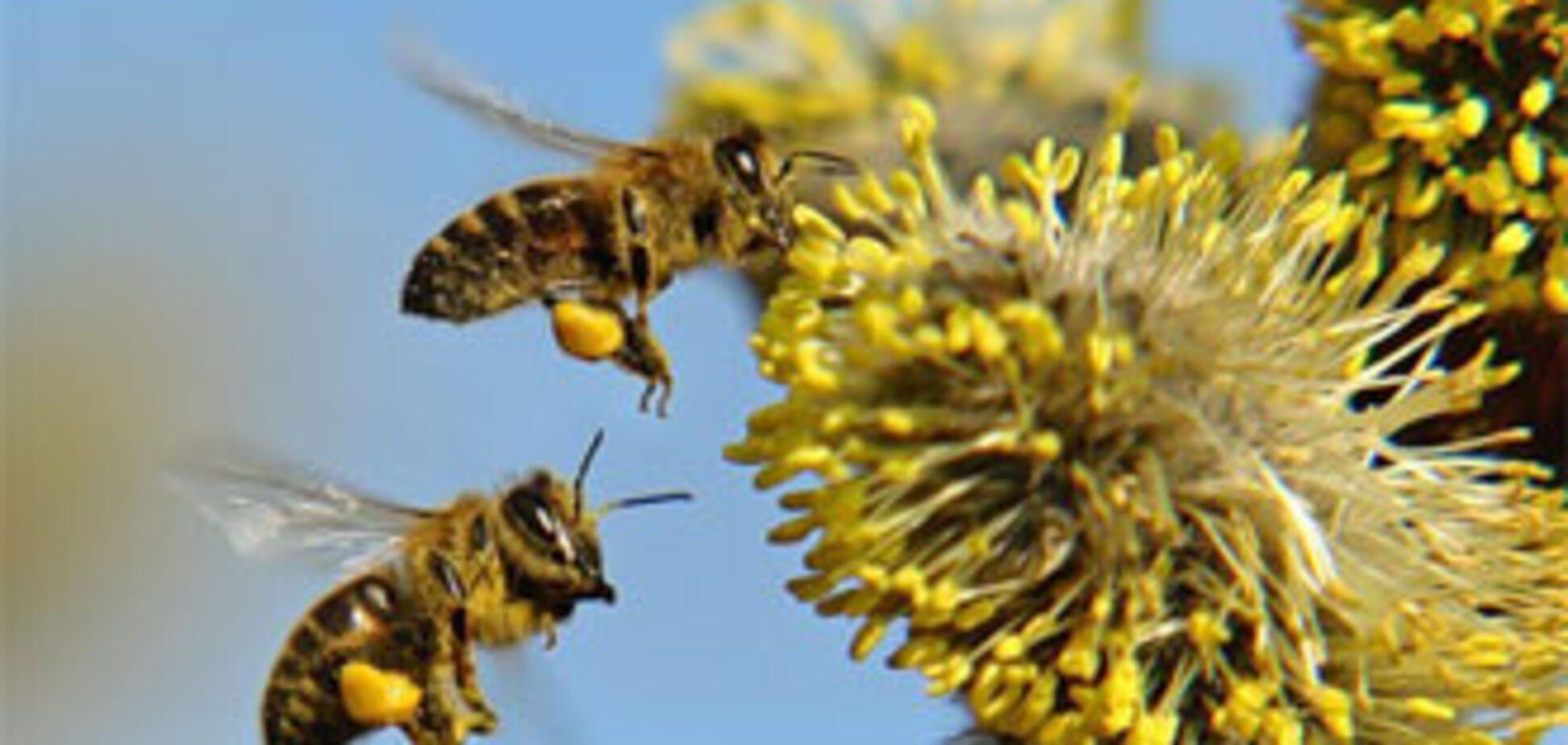 Бджоли вирішують математичні завдання швидше, ніж комп'ютери