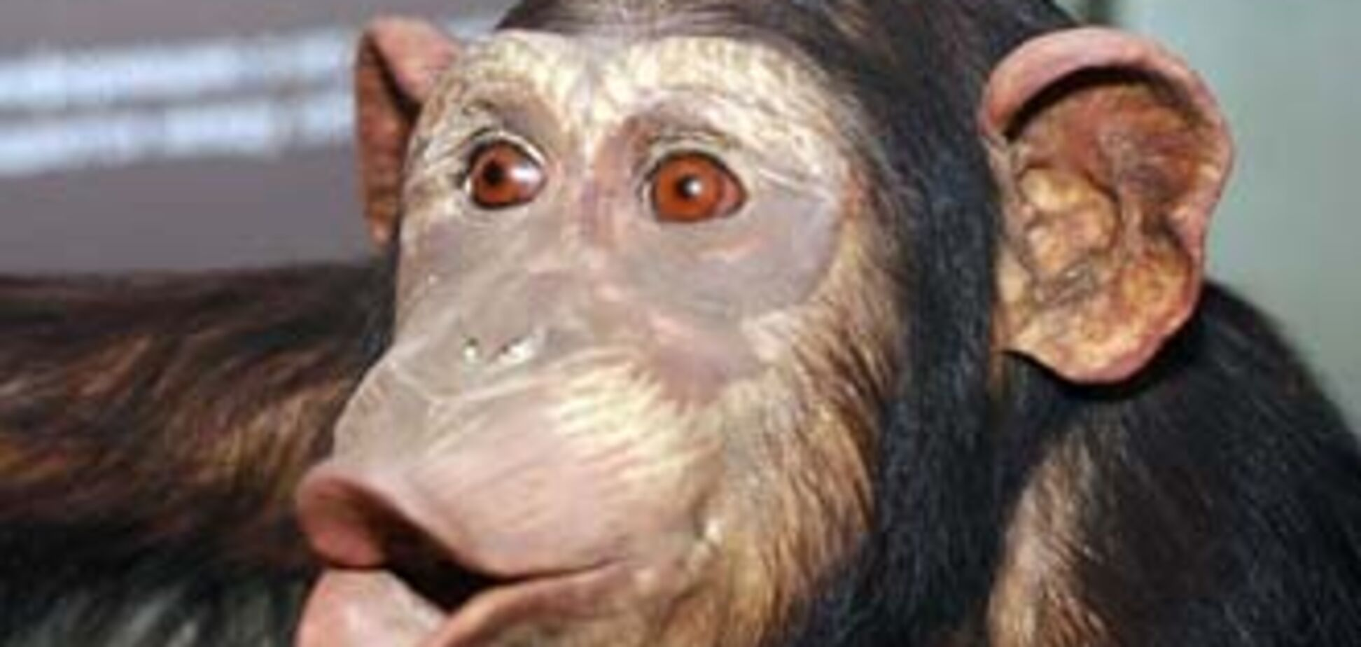 Член виборчкому обізвав журналіста 'мавпою'