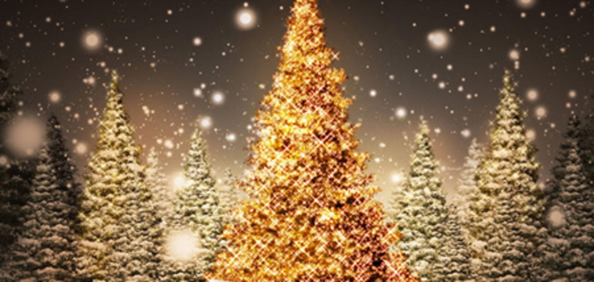 Британец взял в жены рождественскую елку