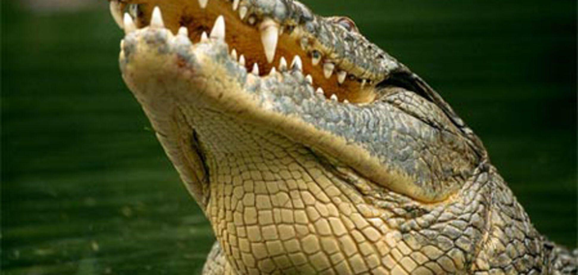 Россиянин хотел вывезти из Египта 8 крокодилов и 40 черепах