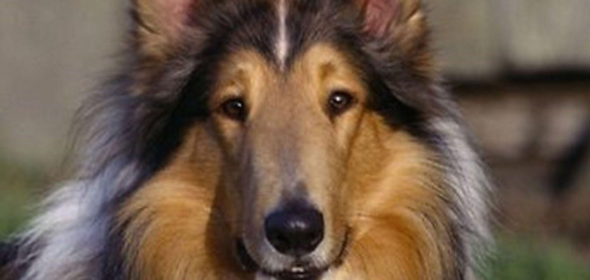 Собака выучила более тысячи названий предметов