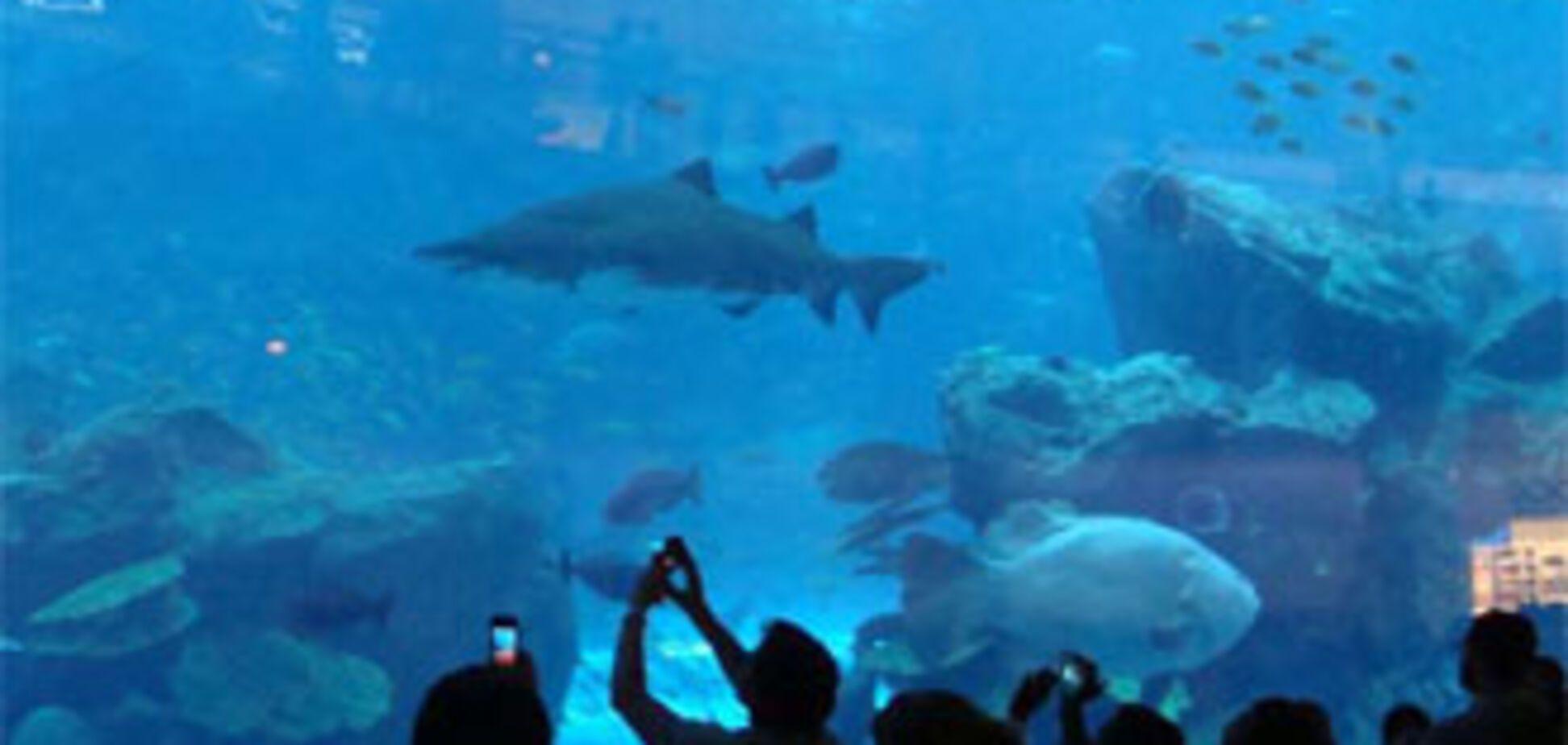 В Дубаи лопнул гигантский аквариум с акулами и скатами