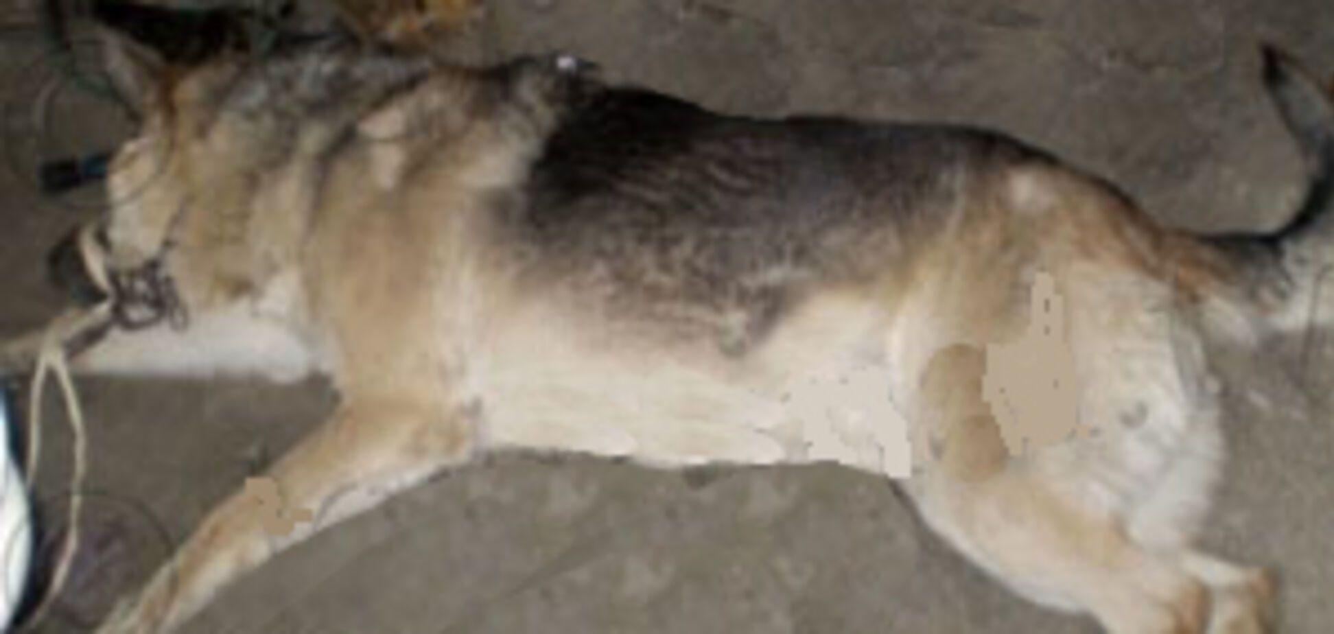 Собака не дізналася дочка своїх господарів і загризла її