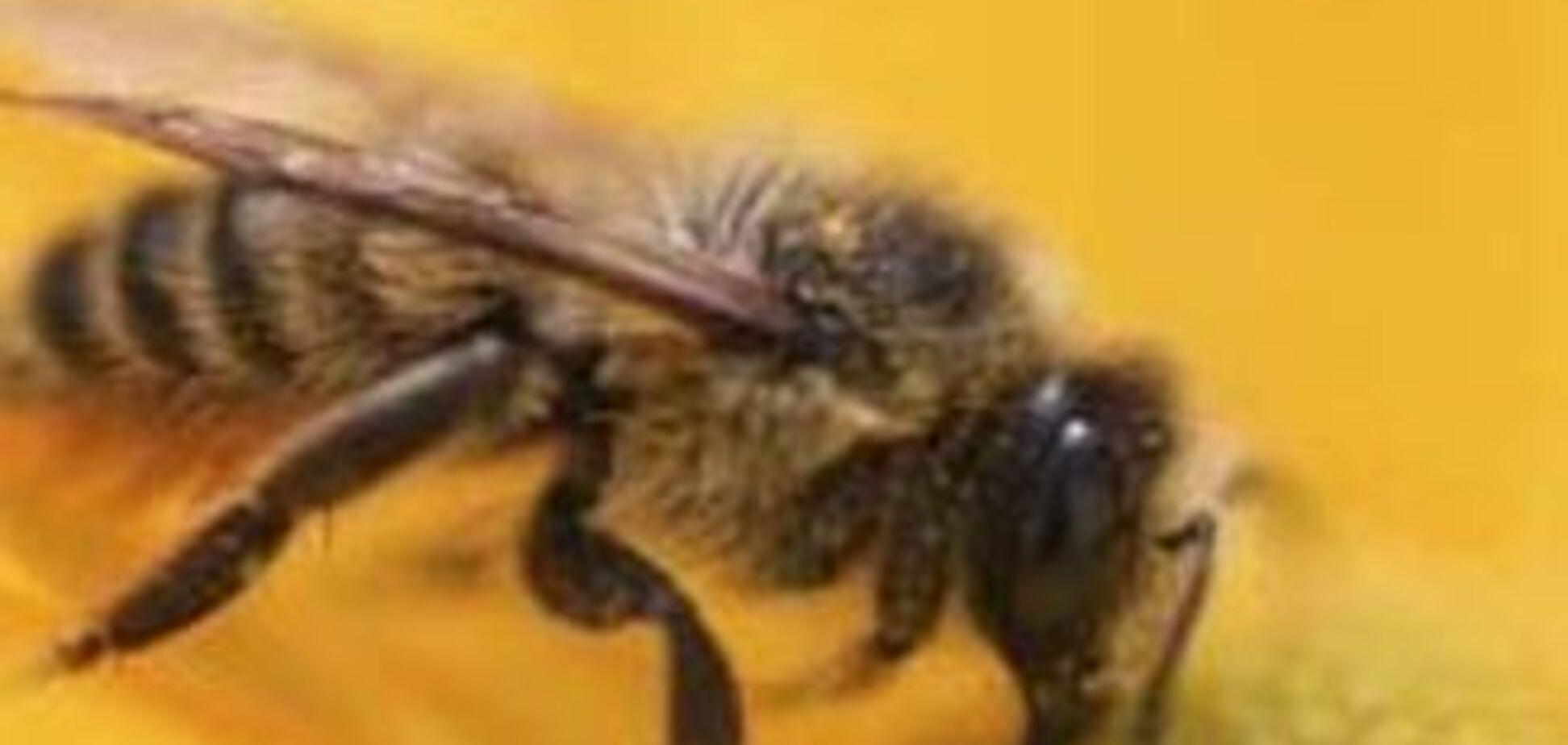 Бджоли на смерть закусали п'яного пасічника