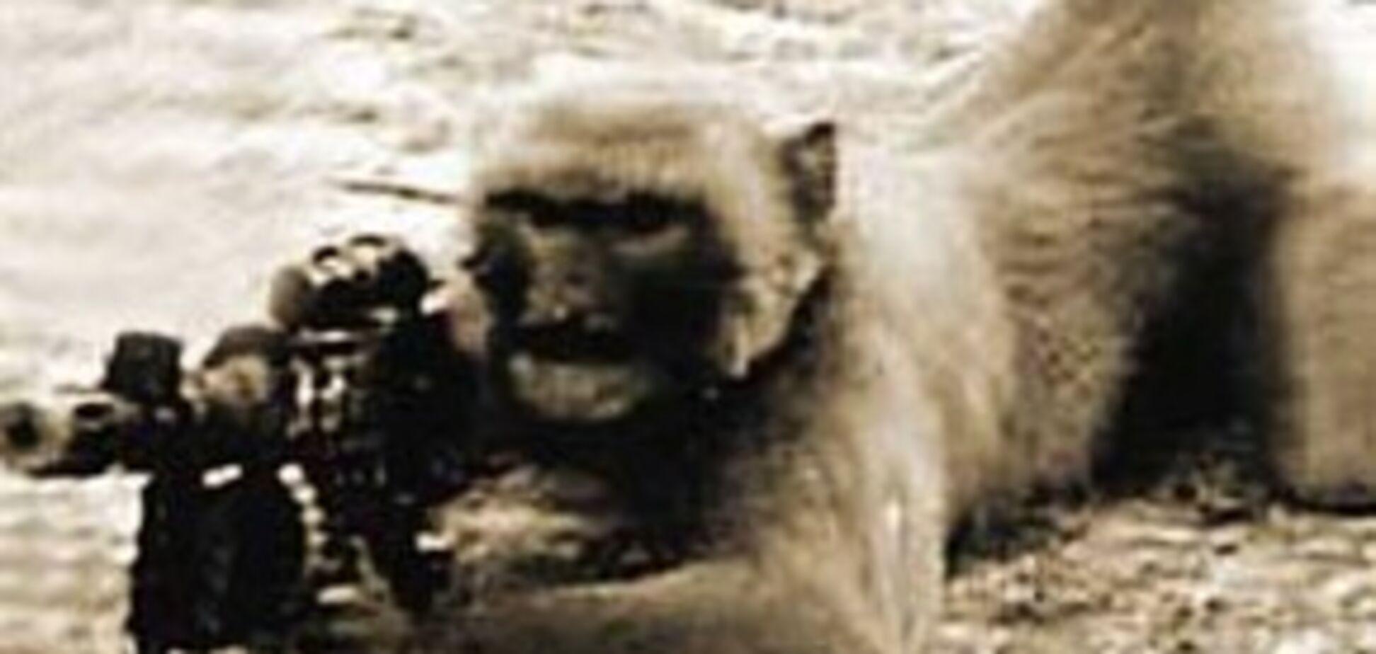 Терористи 'Талібану' тренують мавп стріляти з автомата
