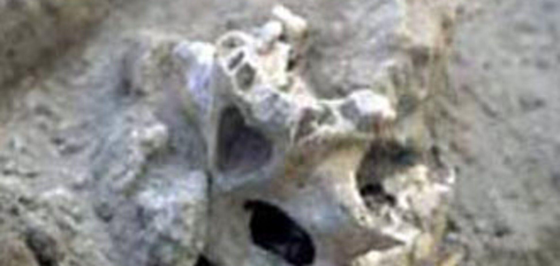 На місці вирубки Харківського парку знайшли останки людей