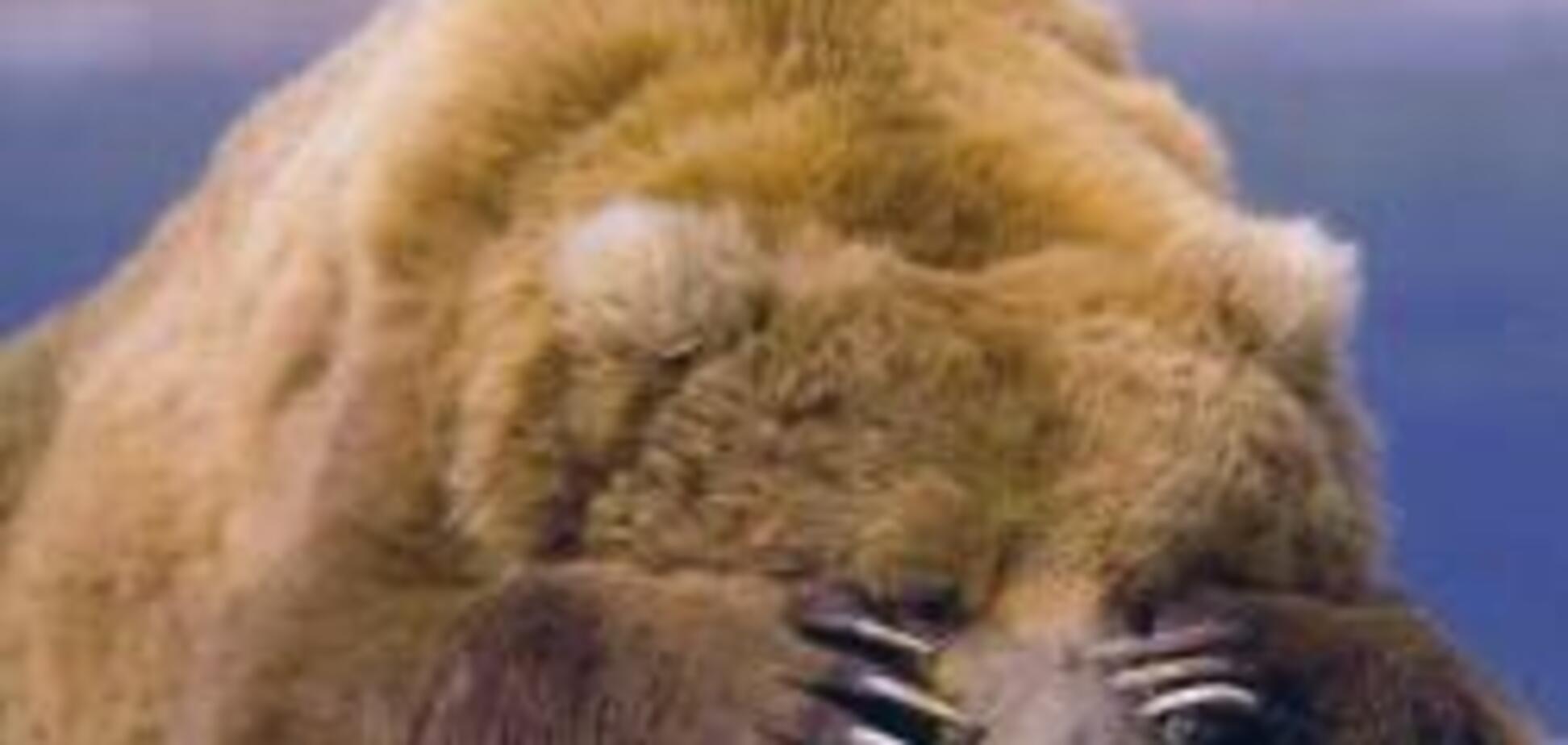 У Чечні ведмідь напав на російського офіцера
