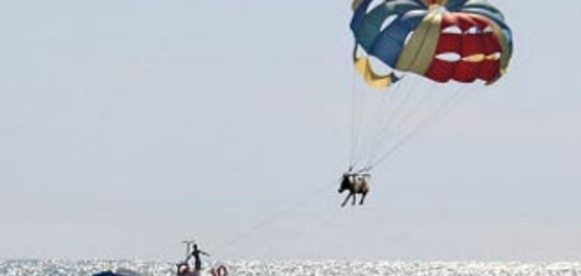 Співробітники міліції відшукали 'літаючого' осла