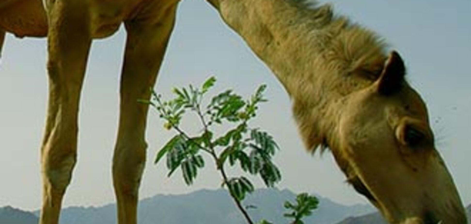 У пересувному звіринці показували напівмертвих тварин
