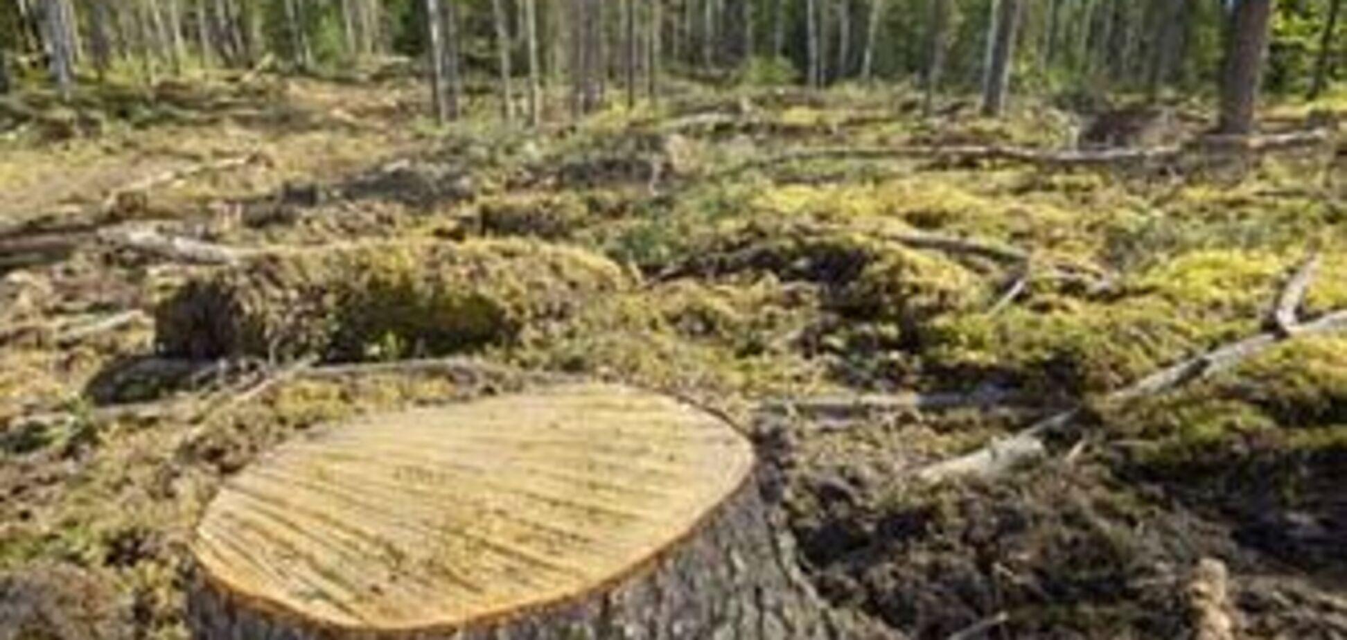 Європу захлеснув потік нелегальної деревини