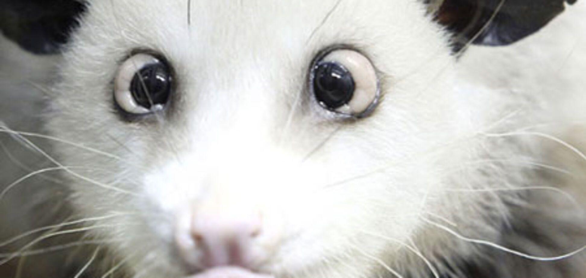 Тварини стають суперзірками. ФОТО