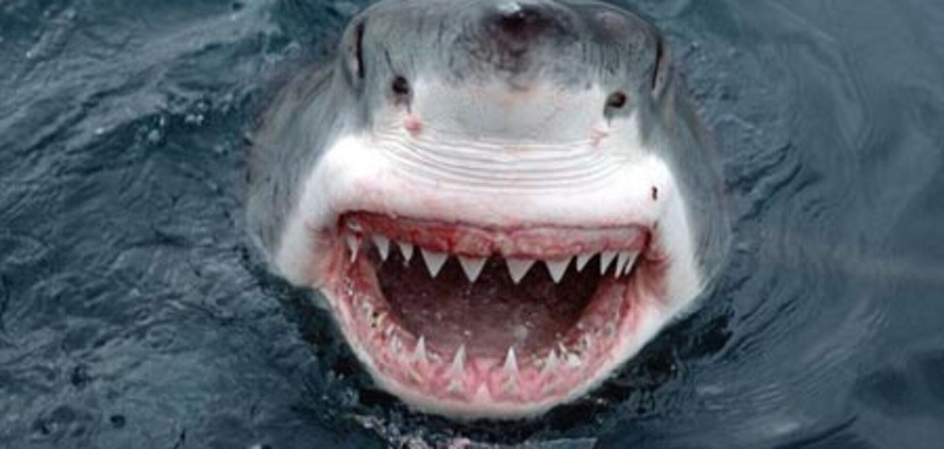 На вулицях затопленого австралійського міста з'явилися акули