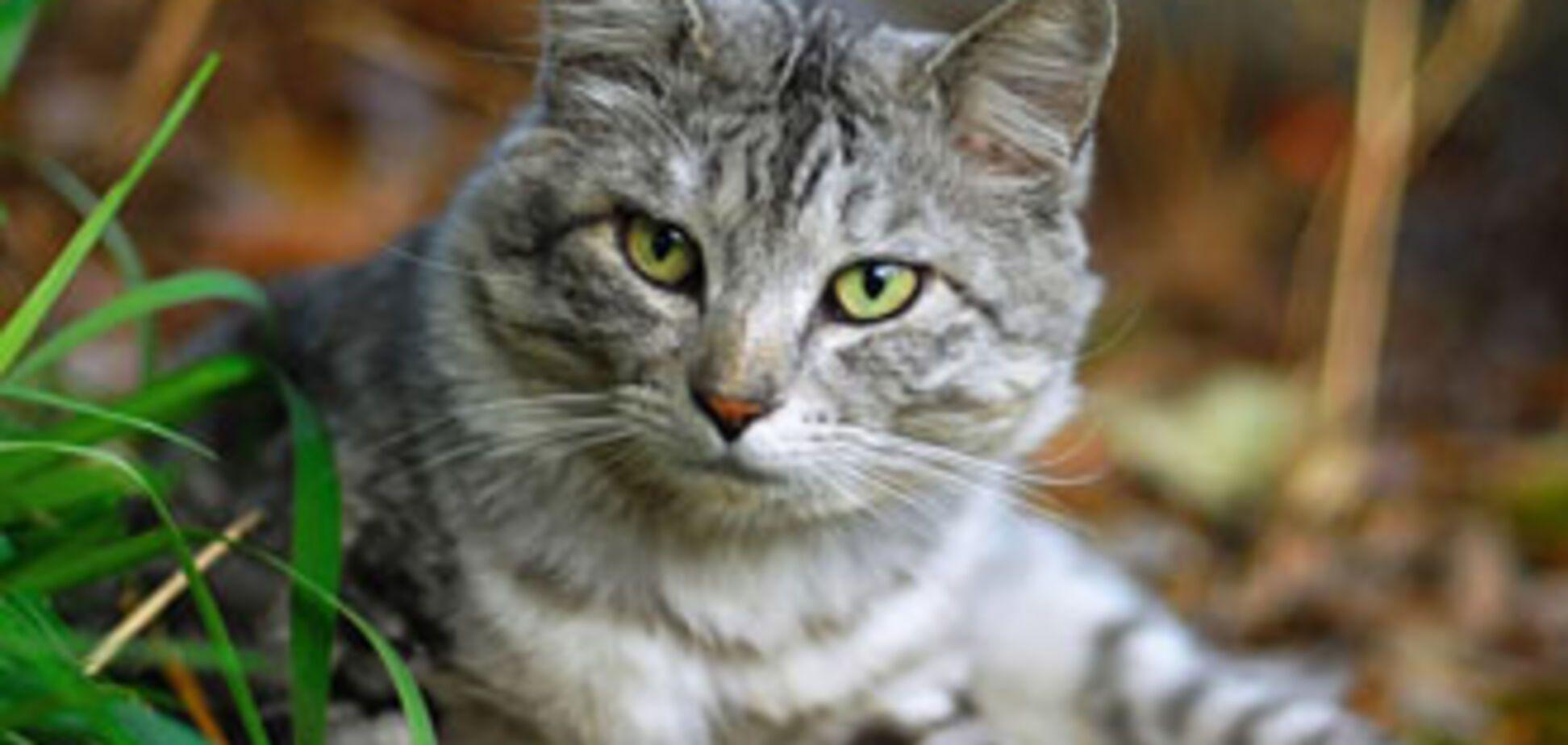 У США кота призначили присяжним у суді