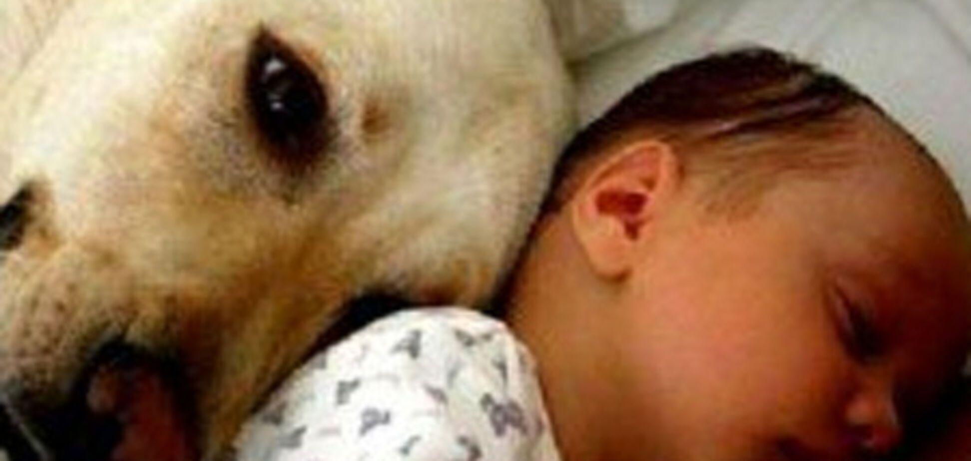 Спати з тваринами небезпечно