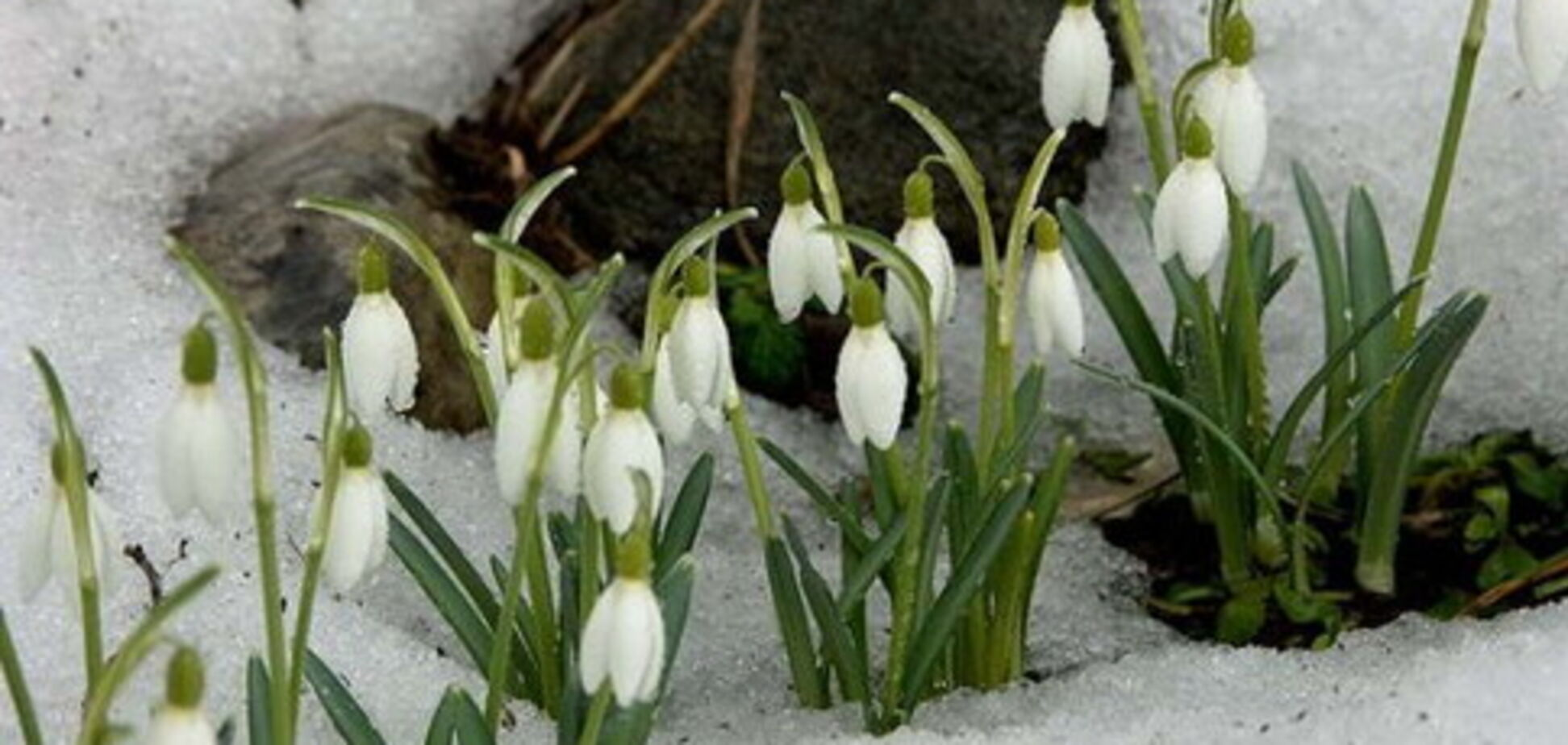 Весна прийде пізно, а пекельного літа не буде