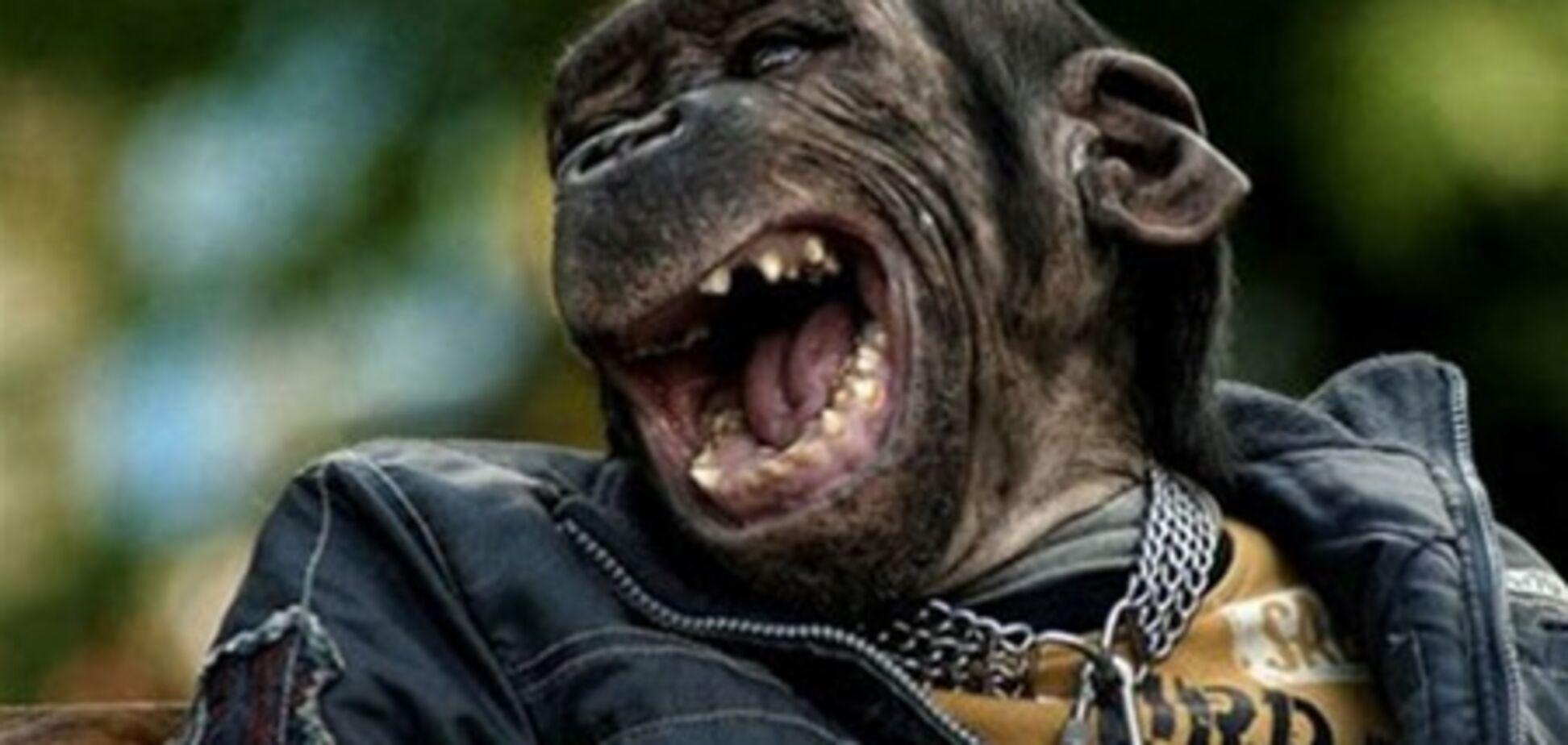 15 найсмішніших тварин Інтернету