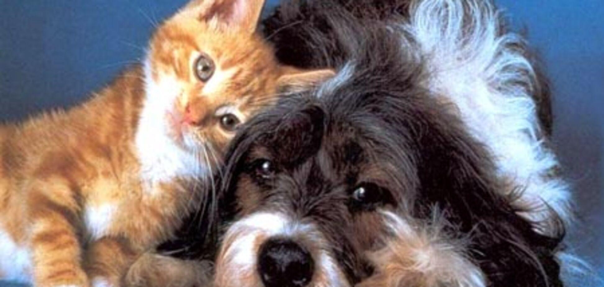 В США кошки и собаки получили права людей