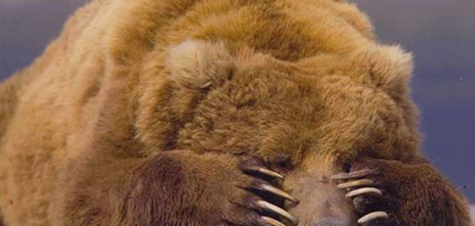 В США медведь ограбил магазин сладостей