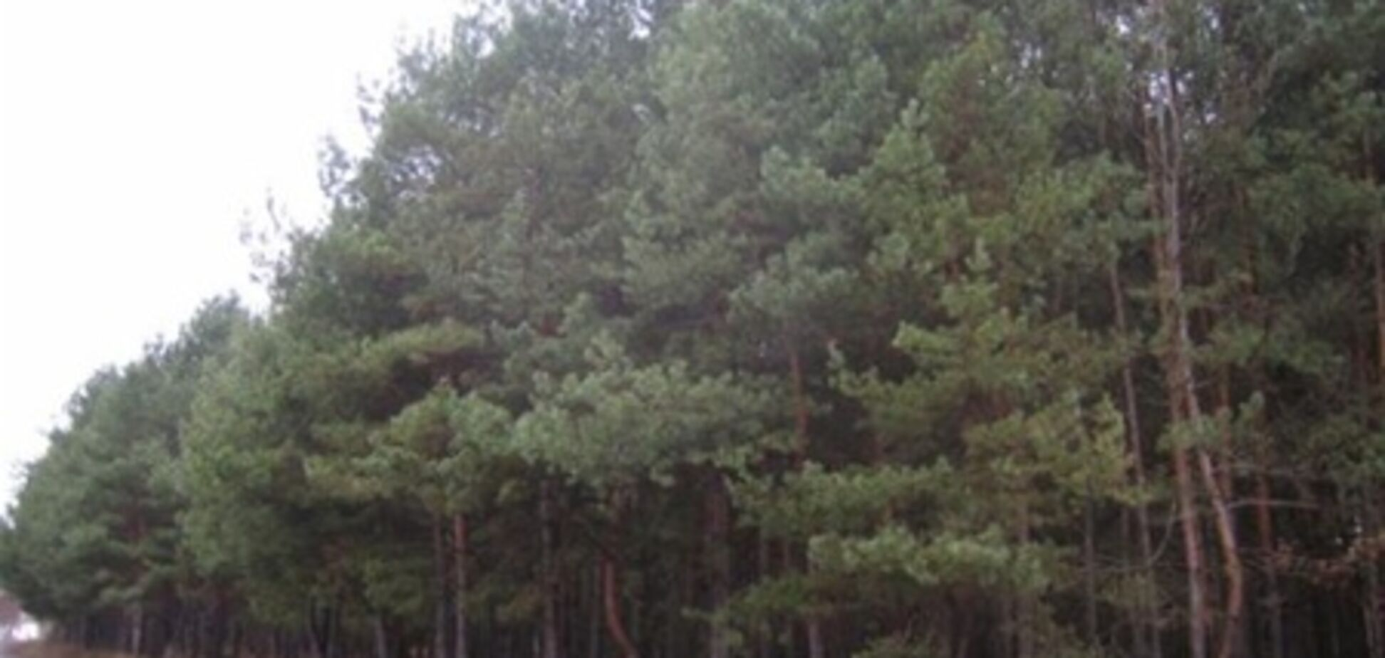 В Киевской области незаконно раздали 70 гектаров земли