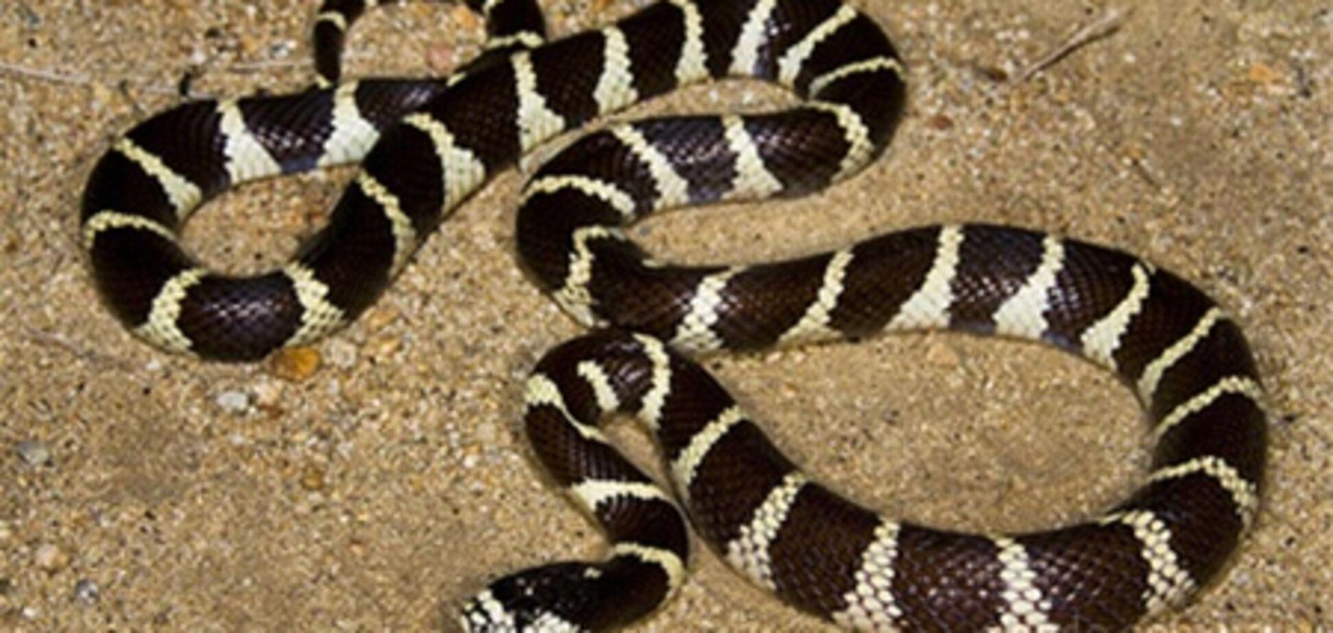 В одному з готелів Німеччини знайшли 100 змій