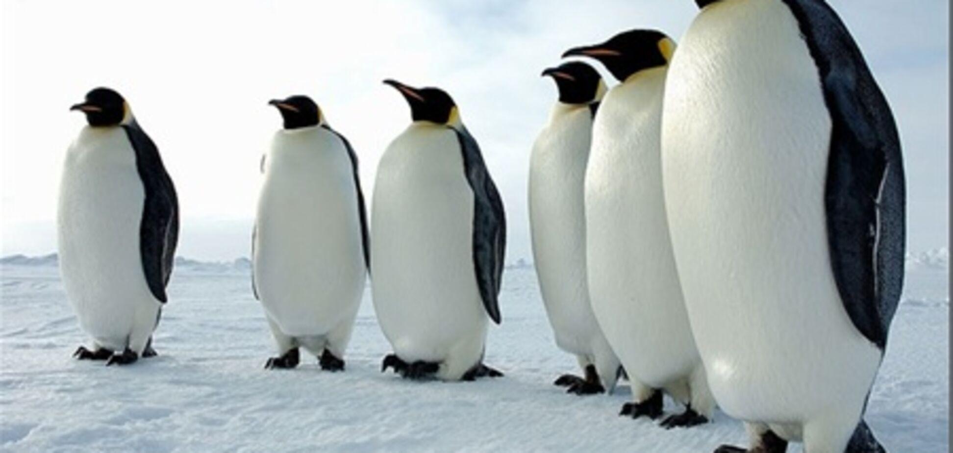Пінгвіни закидали послідом відвідувачів зоопарку