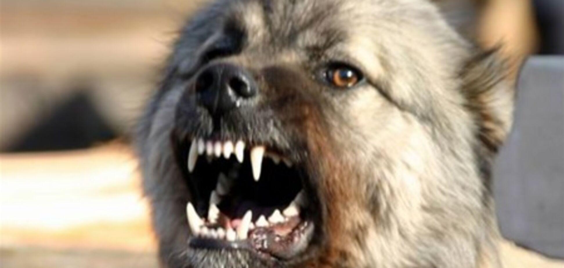 Скажений пес покусав міліціонера