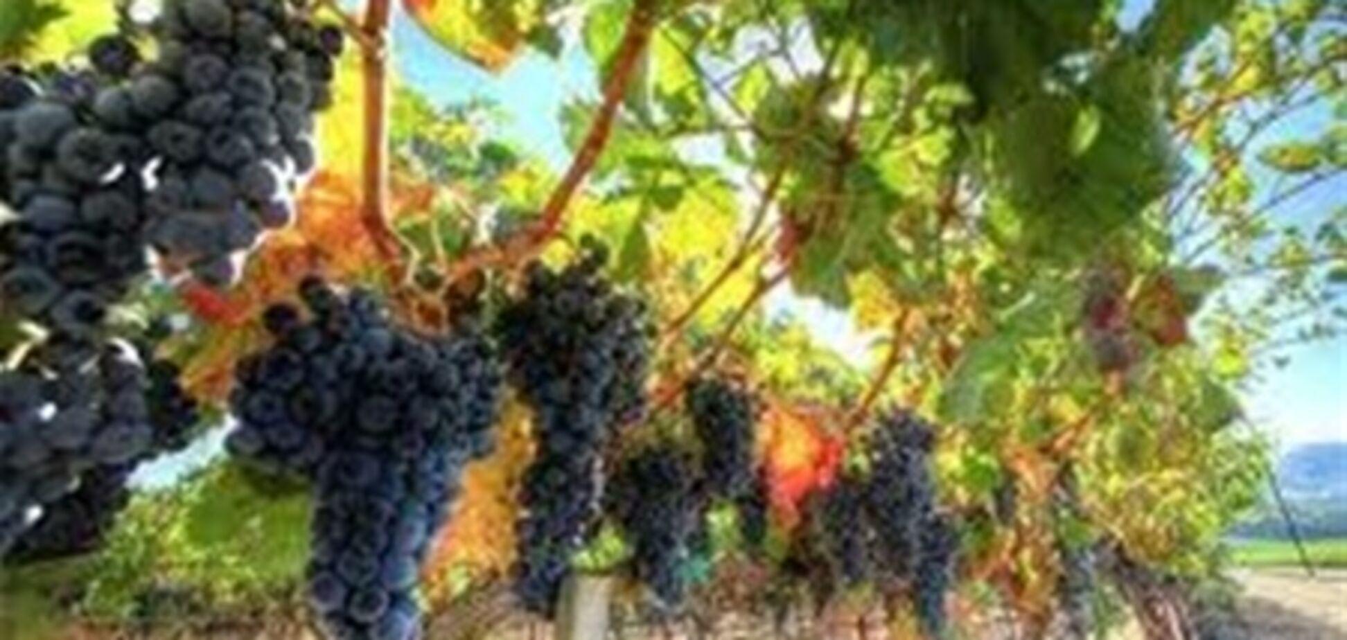 Британський журнал Decanter визначив найкраще вино місяці