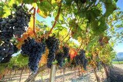 Британский журнал Decanter определил лучшее вино месяца