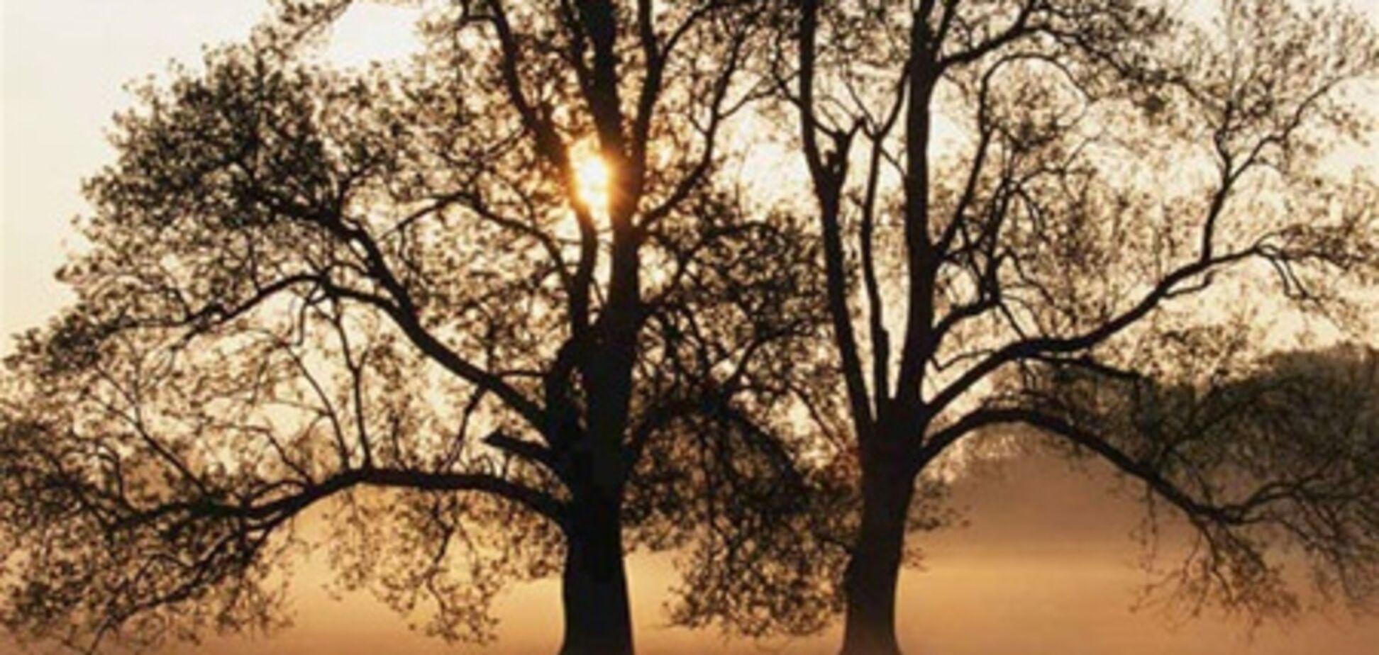 У Криму відбудеться весілля дерев