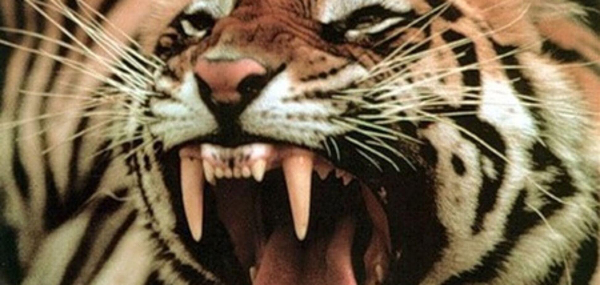 Жена отбила нападение тигра  половником