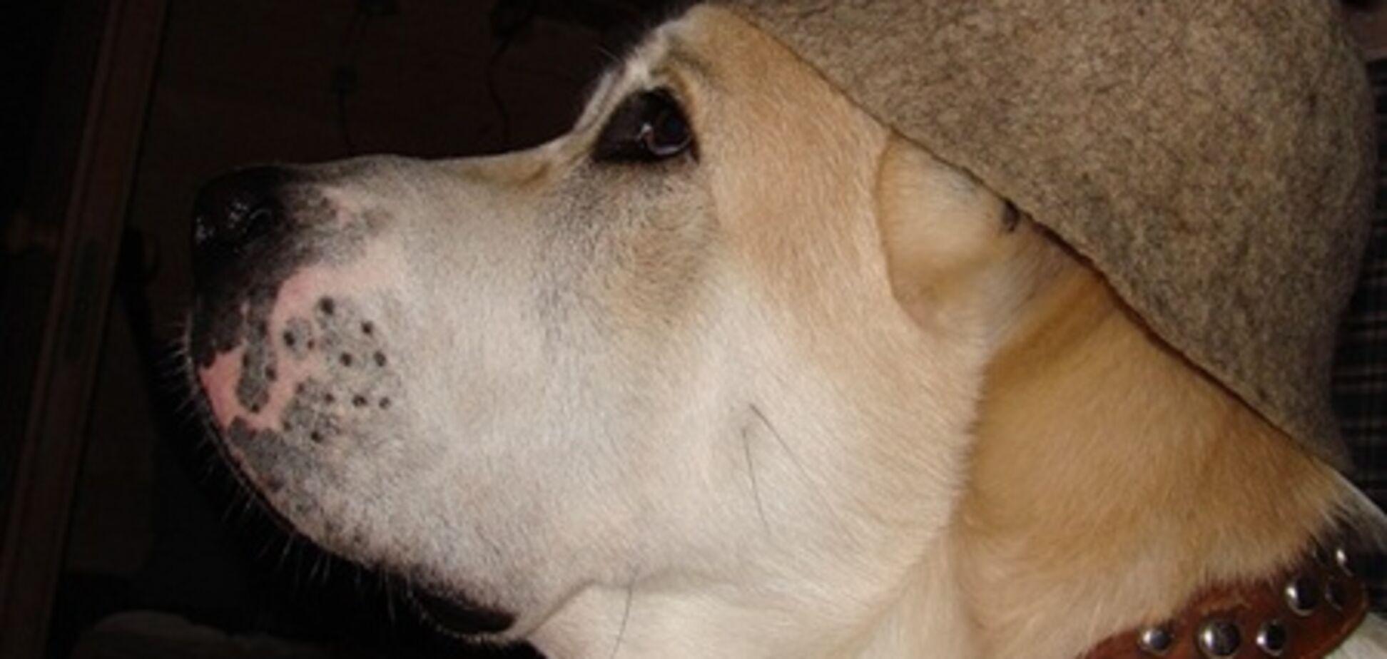 Теперь собаки могут попариться в сауне