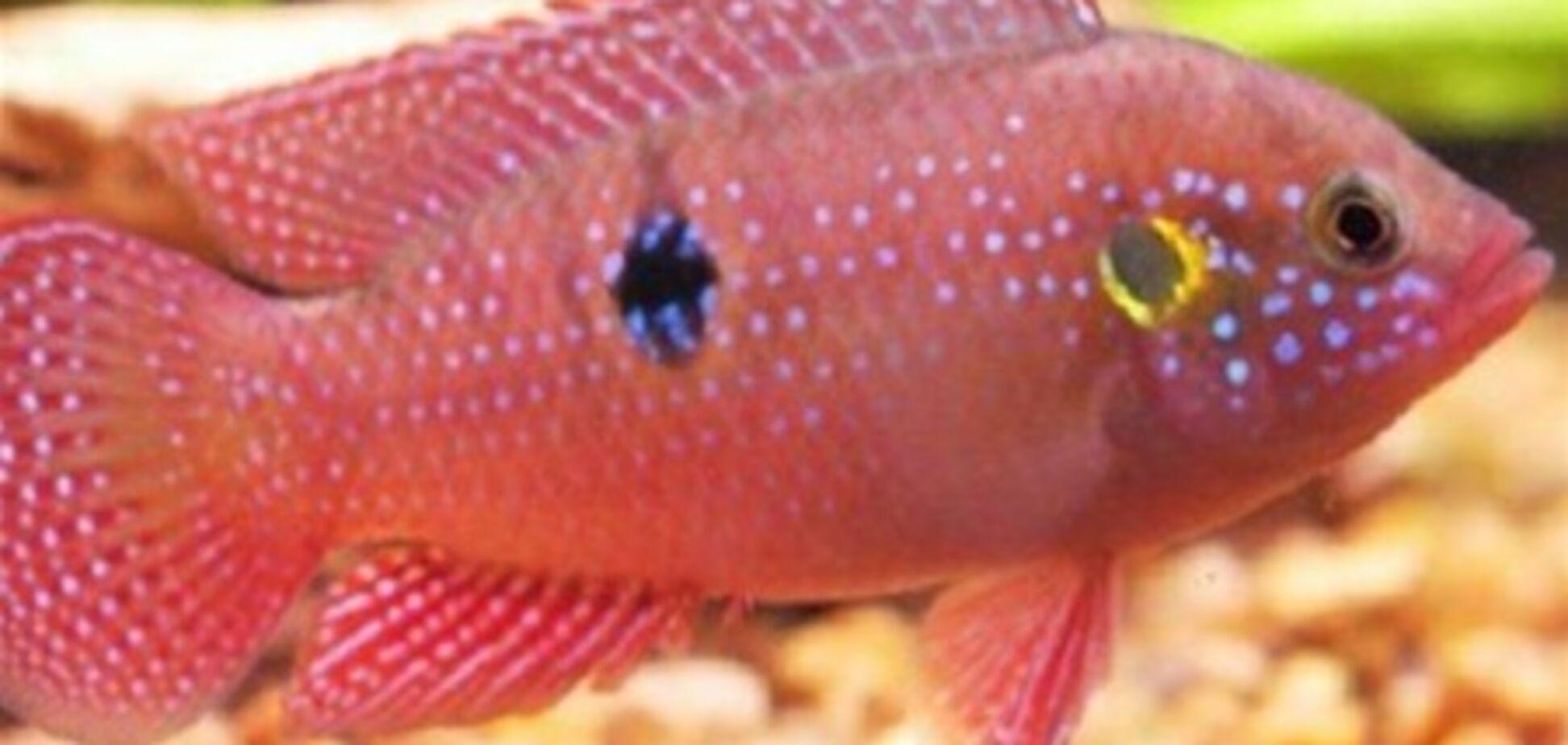 У США підлітку світить електричний стілець за вбивство пари акваріумних рибок кетчупом