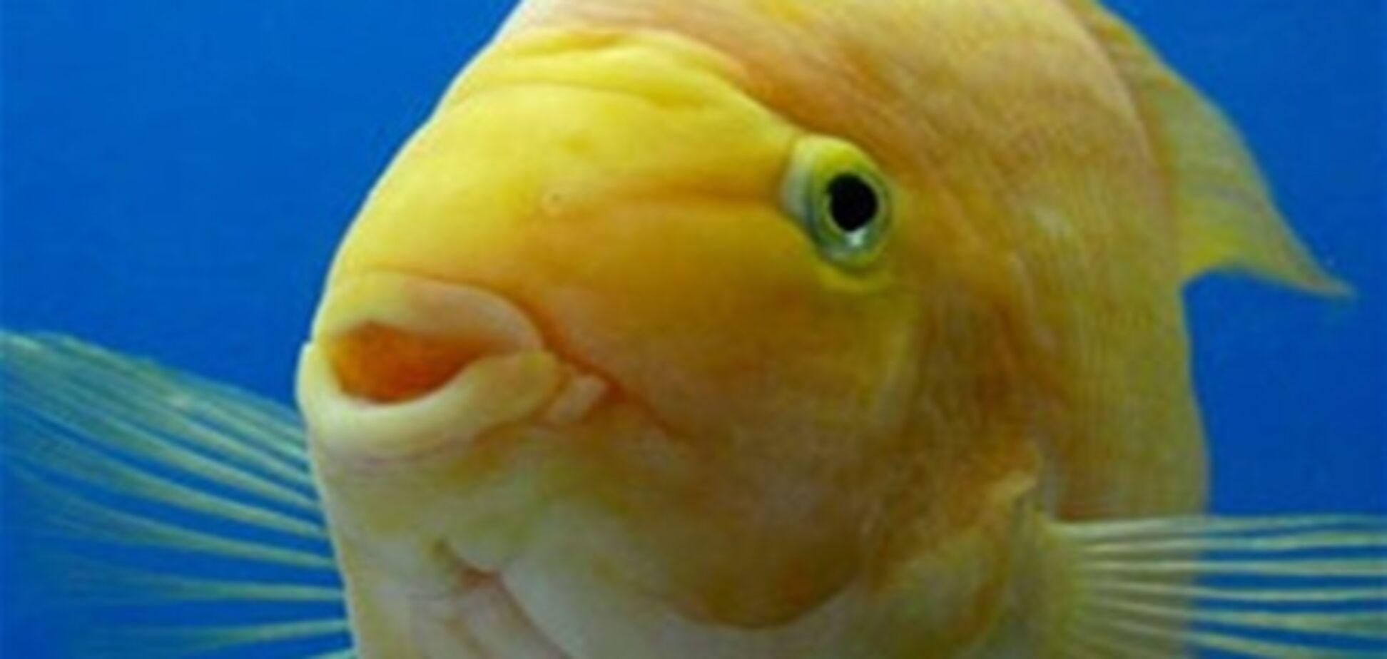 Банда грабіжників убила акваріумних рибок, які стали свідками злочину