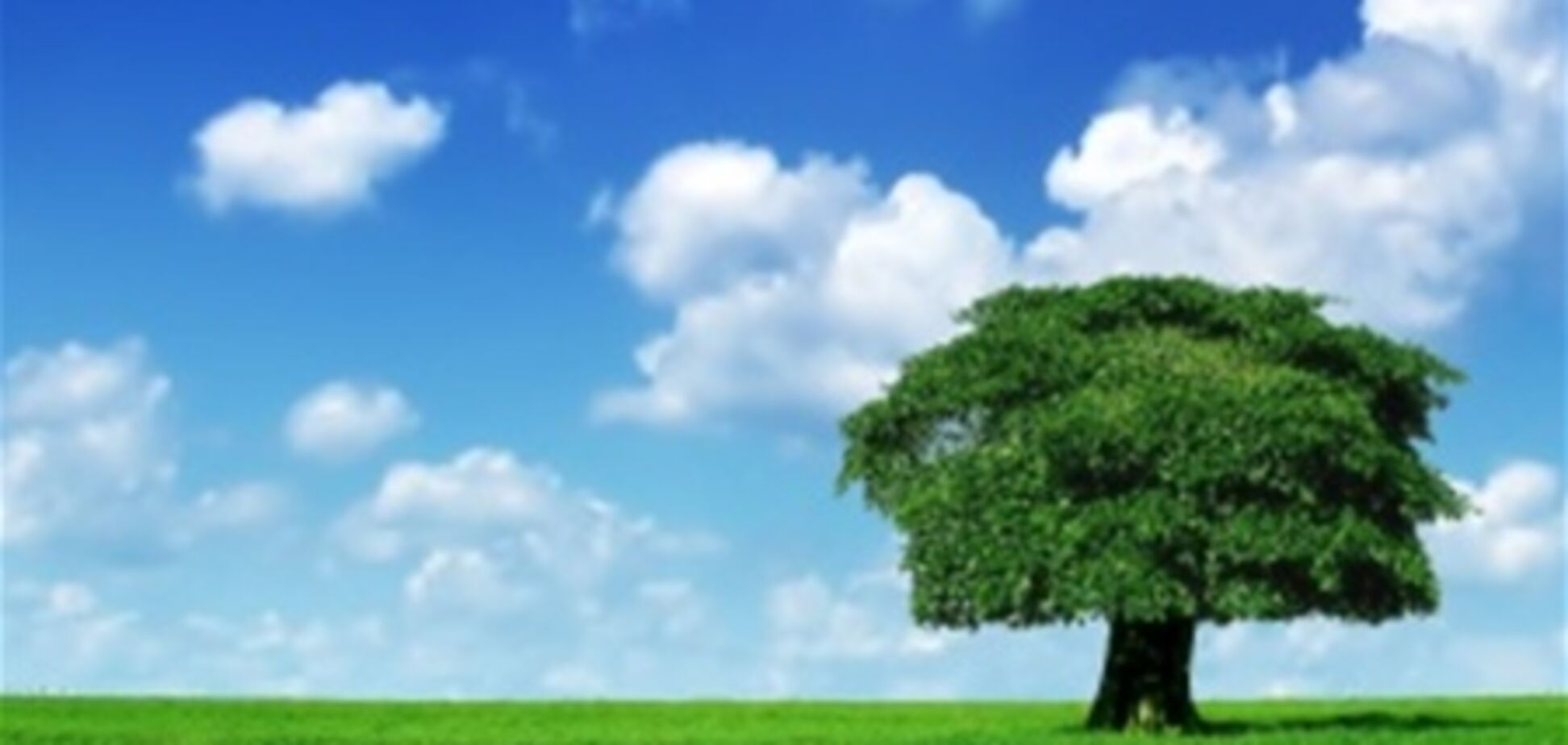 Рецепт Буратино: закопал кеды - выросло дерево