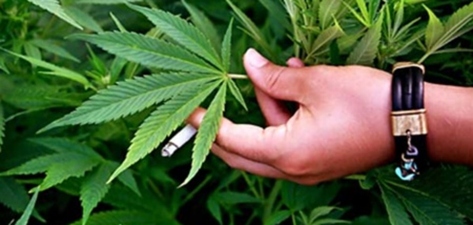 Злісна бабка, яка торгувала марихуаною, спустила на правоохоронців ротвейлера