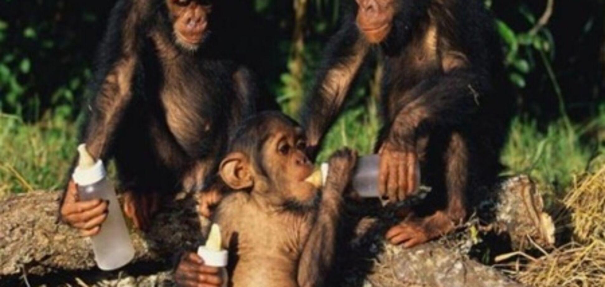 Мавпи в зоопарку перейшли на вино і часник