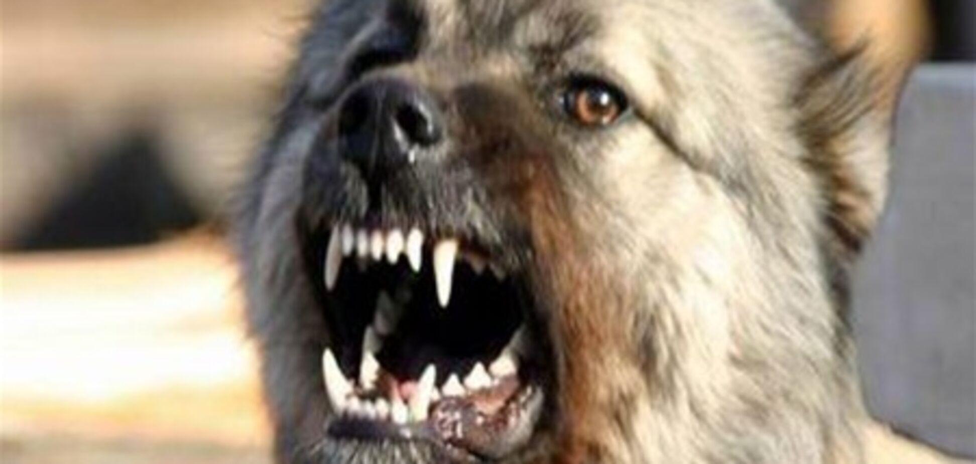 В Киеве массово травят собак