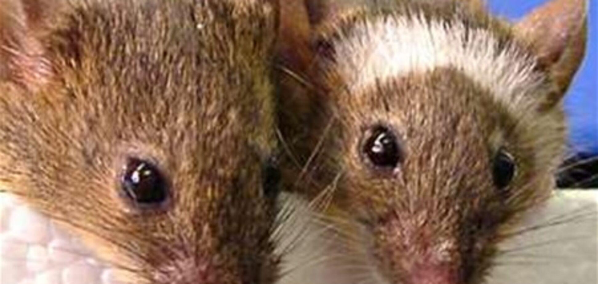 Ученые запутались относительно природы пения у мышей