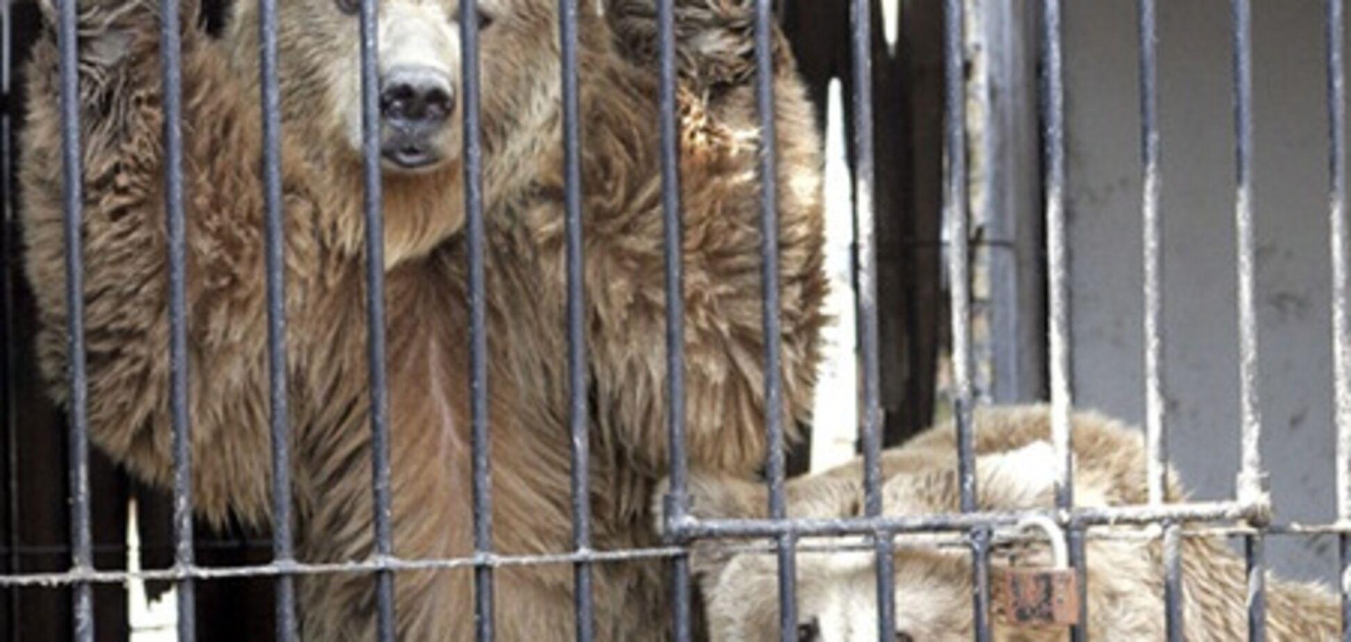 Британские экологи требуют закрыть киевский зоопарк