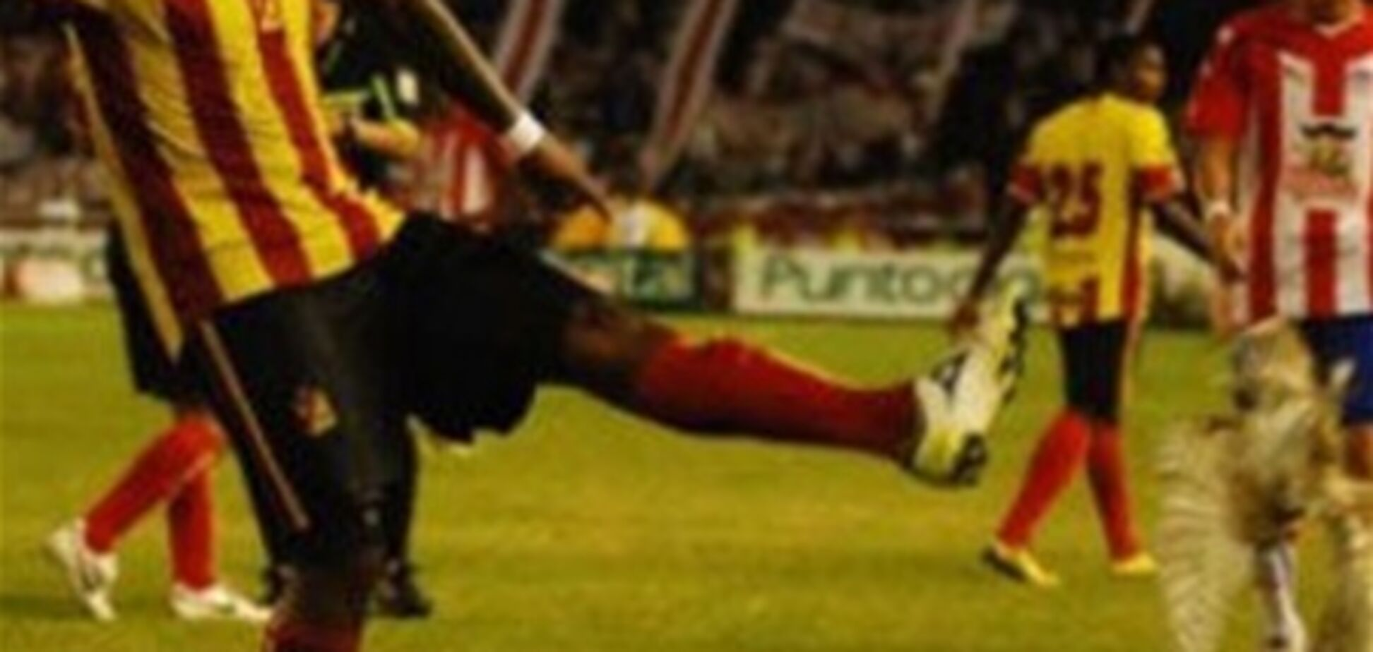 Сове, убитой панамским футболистом, воздвигли памятник