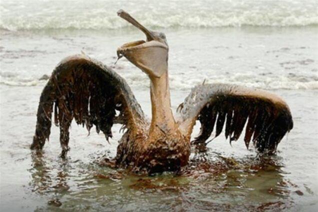 bp oil spill argument