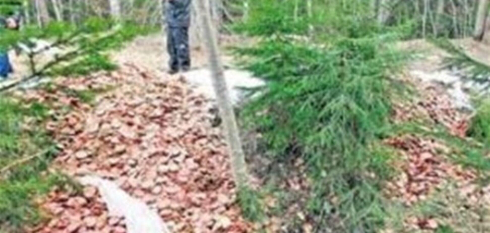 В естонському лісі знайшли тонну нарізаної ковбаси