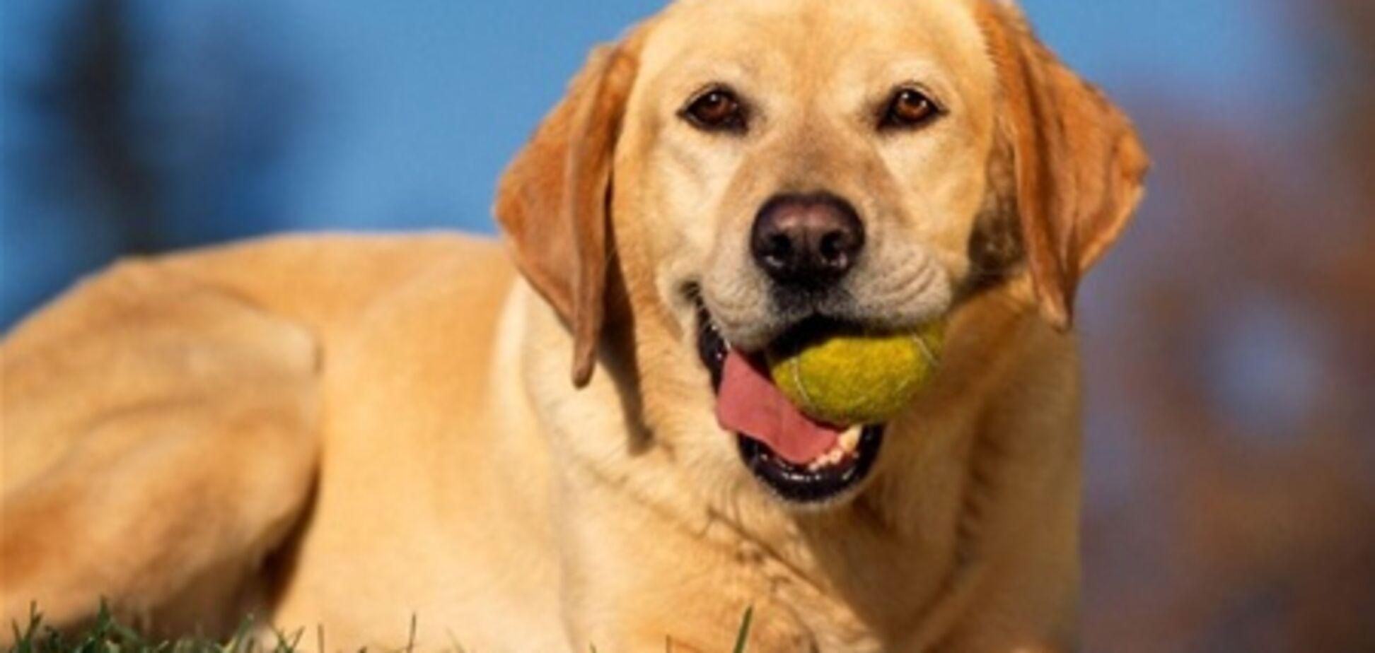 Херсонским собакам запретят лаять с 22.00 до 06.00