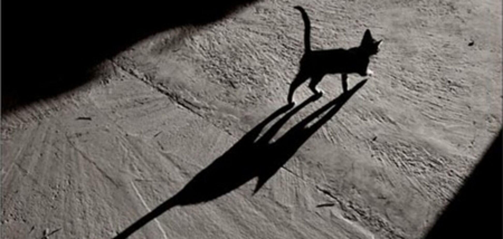 В Австралії ввели коммендантскій годину для котів